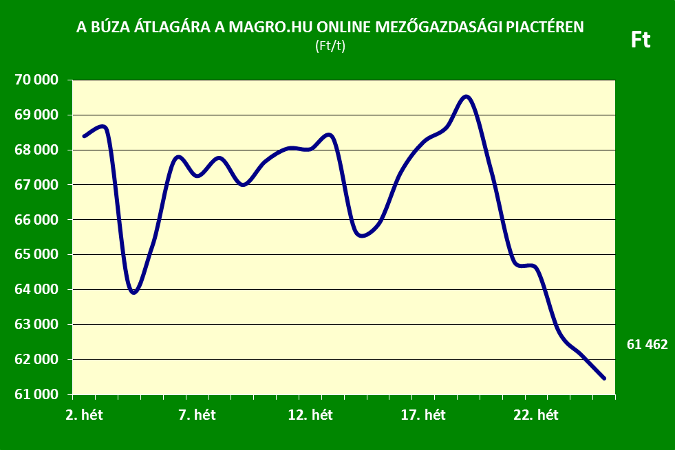 Búza ár 25.hét Magro.hu