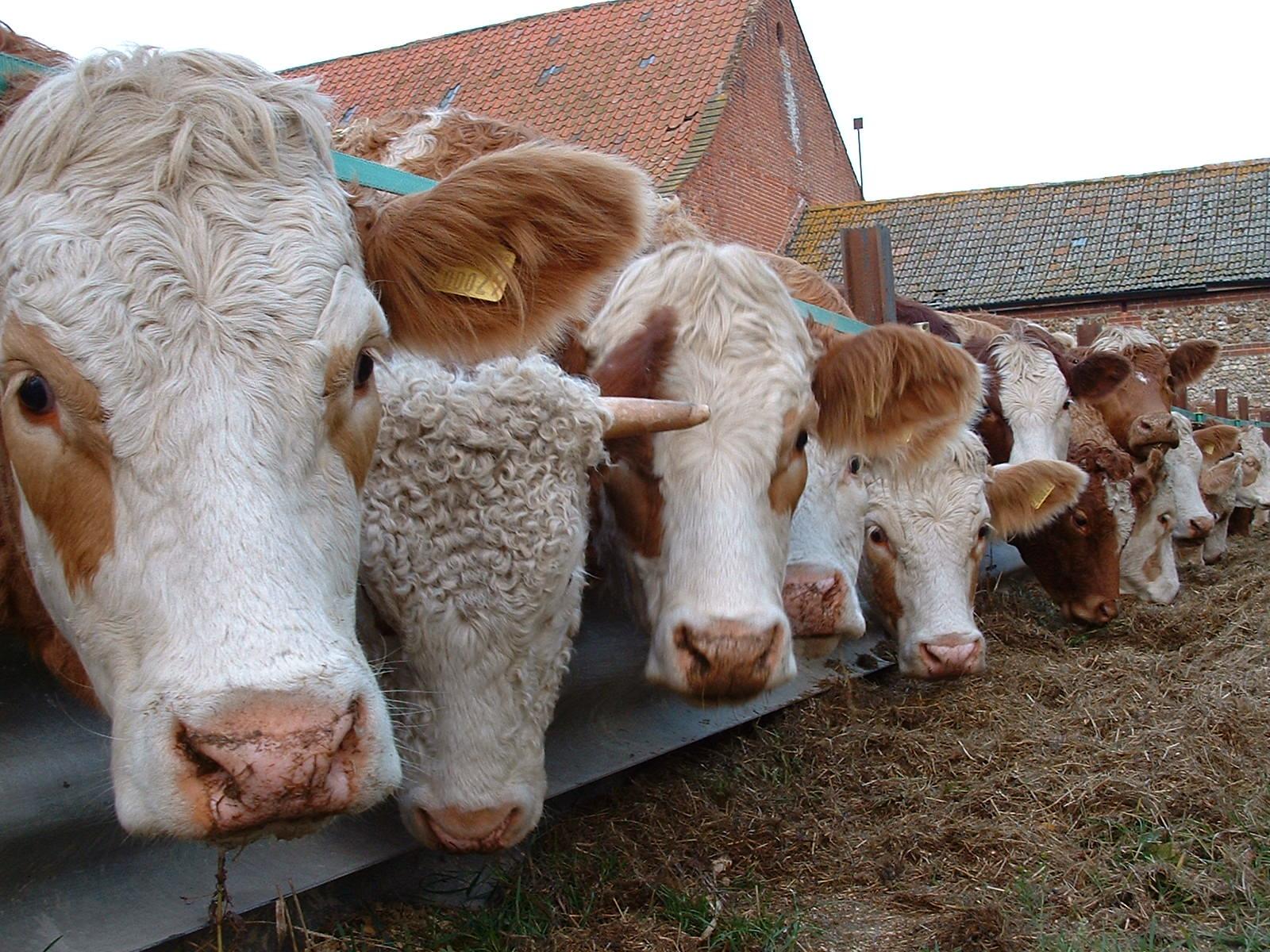 Hazai marhahús világszínvonulú