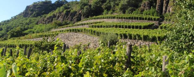 Borászati és szőlő-/gyümölcsös ültetvények kapcsán összesen 464 kérelmezőnek folyósítanak támogatást