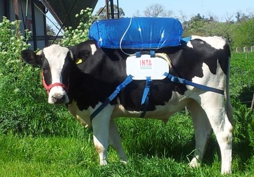 Egy szarvasmarha egy nap kb. 300 liternyi metánt produkál