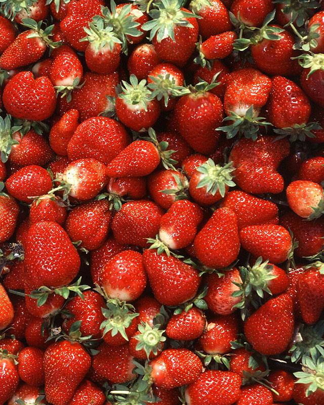 Akár már 420 Ft/kg áron is szedhet epret