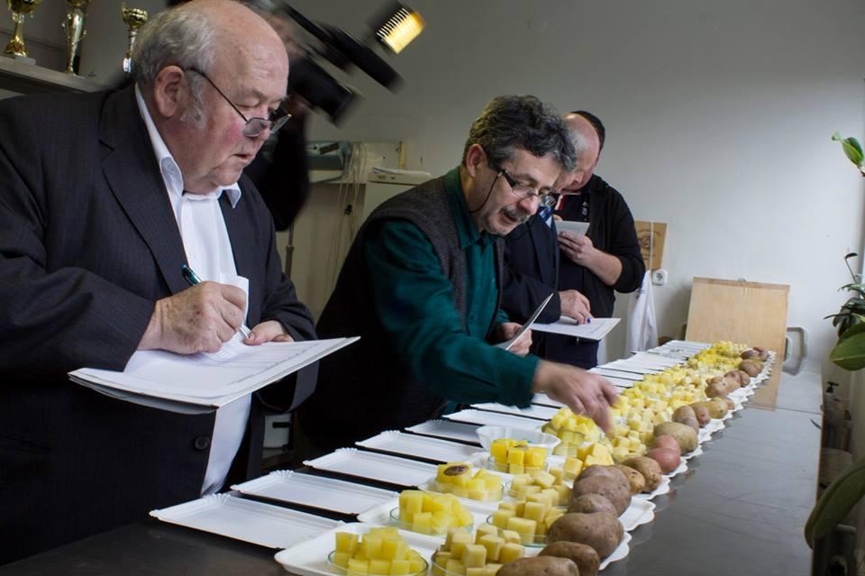 A burgonyák nyers és főzési szürkülését is pontozták