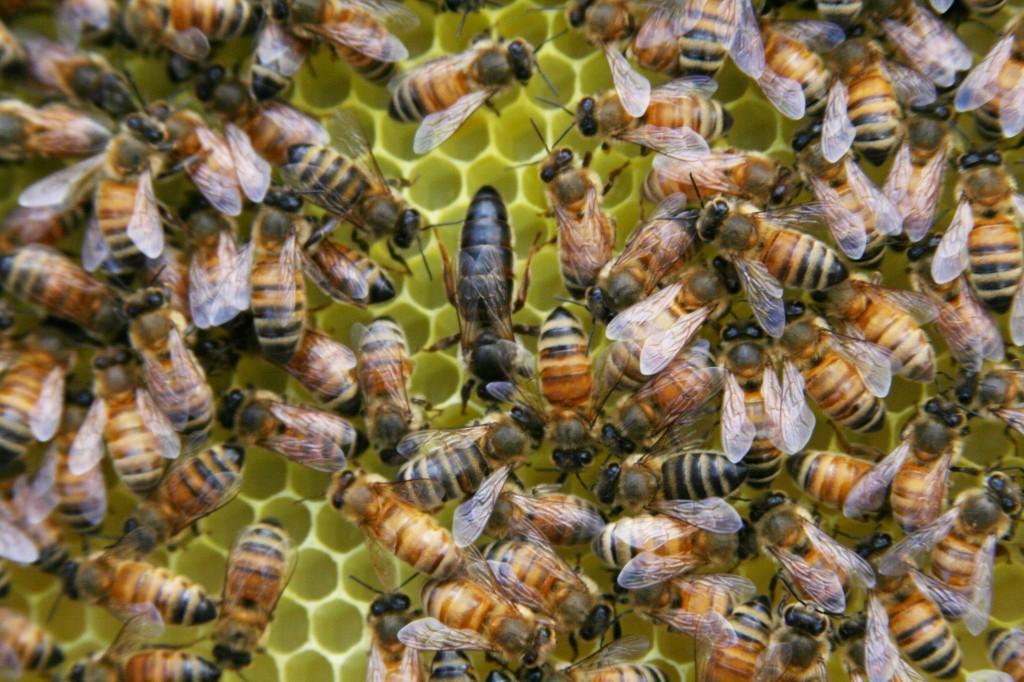 84 méhész részesül az aktuális támogatásból