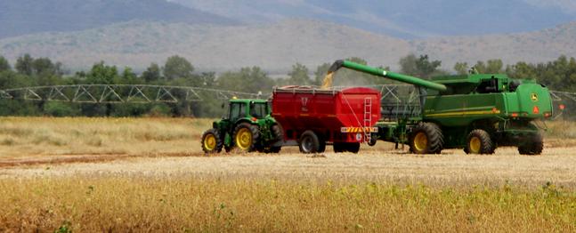 Augusztus elejére befejeződhet az aratás