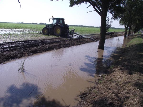 Szentesen szivattyúznak, de a talajból folyamatosan érkezik az utánpótlás, ez pedig nagy melegben problémát jelent, belefulladhat a növény. Fotó: Králik Emese (delmagyar.hu)
