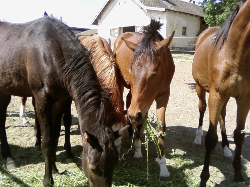 Szent István lovai
