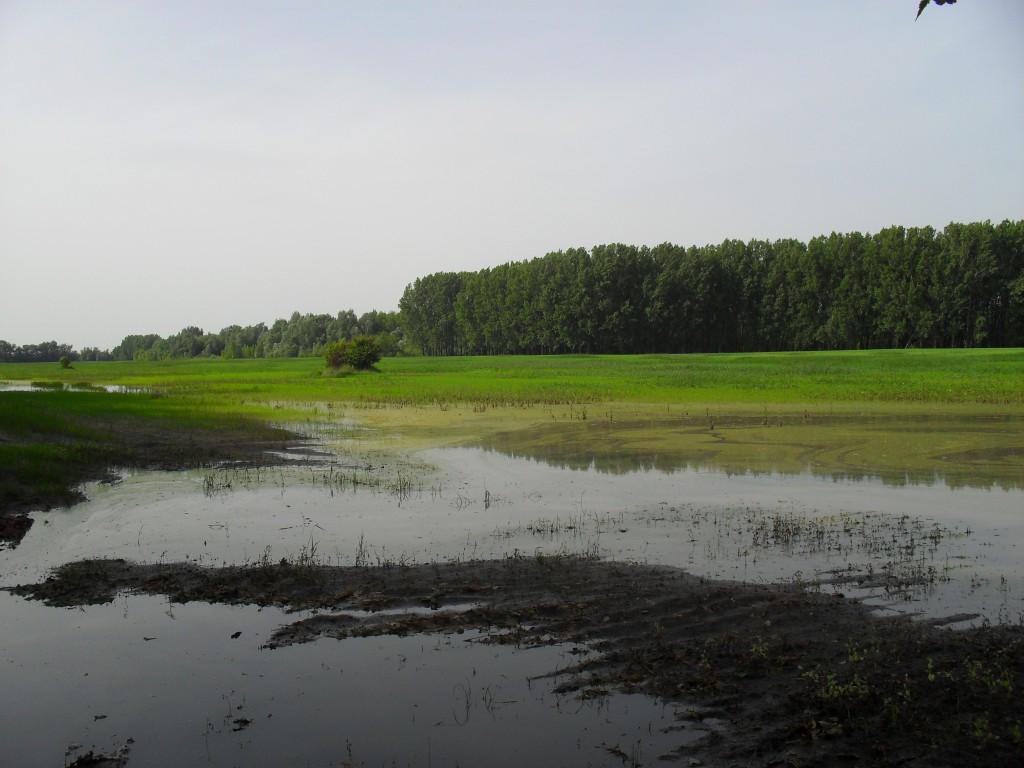 A belvizes területekre nem lehet géppel rámenni, így a betakarítás és az őszi talajmunkák zöme is csúszni fog