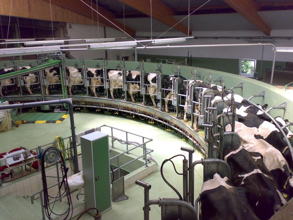 Minél korszerűbb egy szarvasmarhatartó telep, annál nagyobb tejhozamot lehet elérni