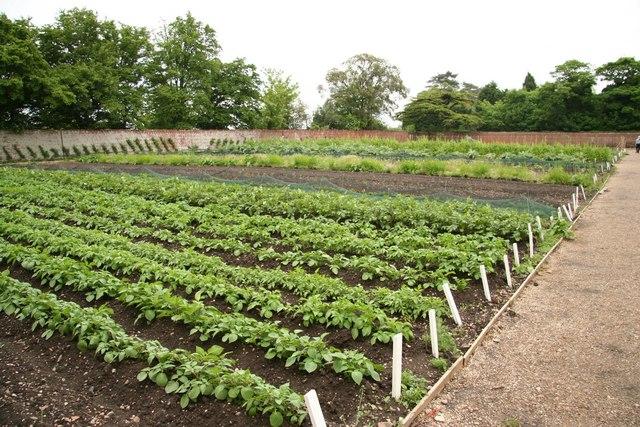 2015 és 2020 között a kertészeti ágazatok kiemelt támogatásban részesülhetnek