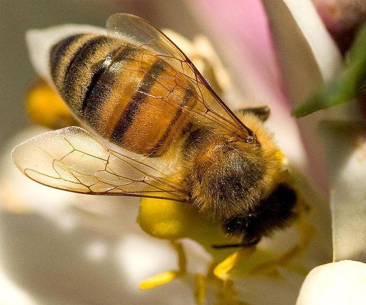 Nem igazán volt melegük idén nyáron a méheknek.