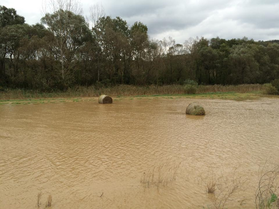 A hirtelen lezúdúló eső és a belvíz hátráltatja a munkát és veszélyezteti a terményt is. Fotó: Udvaros Péter