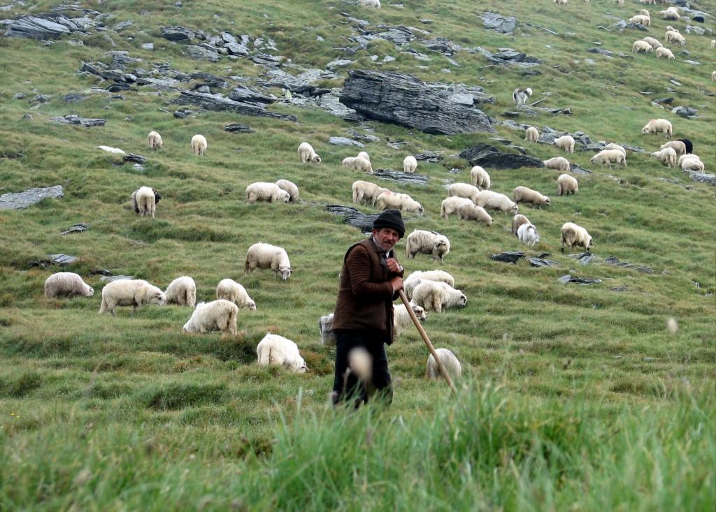 Több munkalehetőség jöhet létre a mezőgazdaságban, azon belül is az állattartás terén.
