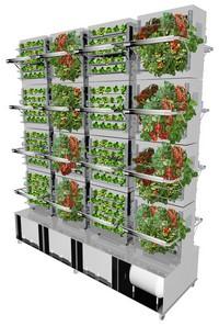 Aeropóniás növénytermesztés (Forrás: portfolio.hu)