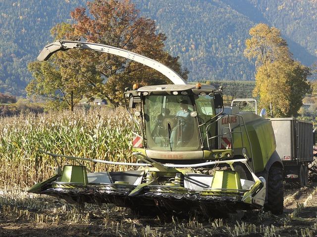 Rekordtermés várható Békés megyében kukoricából!