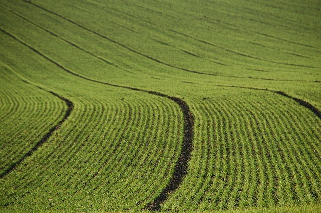 Brüsszelnek aggályai vannak a külföldiek magyarországi földhasználatával kapcsolatban