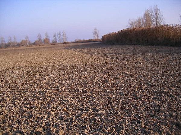 Tavaly az országban átlagosan 19 százalékkal kevesebb szántóföldet értékesítettek, mint az előző évben