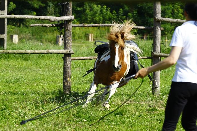 Célja az legyen, hogy lova fontolja meg viselkedését, ezáltal váltson bal agyféltekés viselkedésre. Fotó: Sebestyén Dóra (Lovas Nemzet)