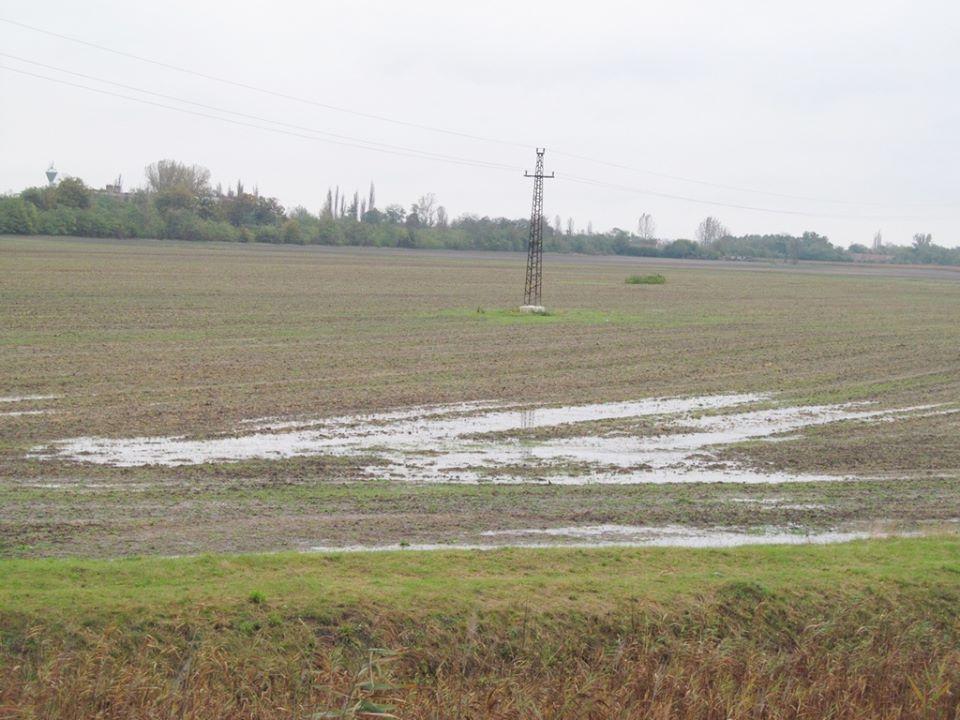 Dömsödnél (Pest megye) így néz ki egy mezőgazdasági terület jelenleg Fotó: Sárosi Gyula