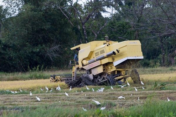 A képen egy rizskombájn látható akció közben