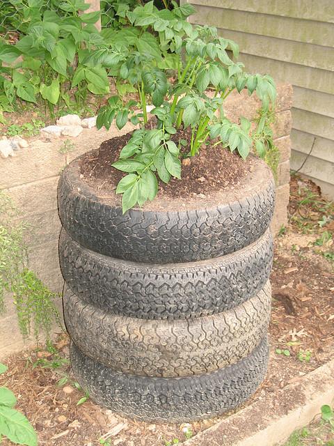 Így is lehet, de ha egészséges burgonyát szeretnénk fogyasztani, inkább fából üssünk össze egy keretet, ami még dekoratívabban is néz ki