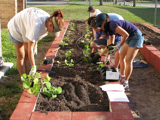 A felmérésben részt vett kertészkedők nagy többsége nő.