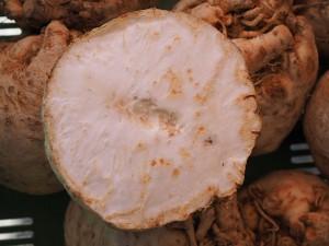 A gumós zeller kilója 3 százalékkal lett olcsóbb