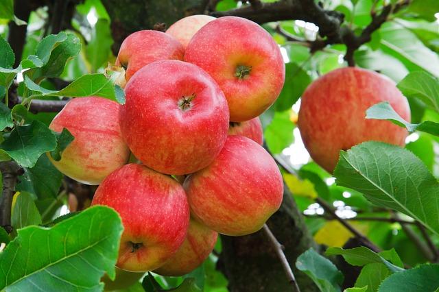 Az USA-ban több mint 2500 almafajtát termesztenek, de közülük mindössze 1 számít őshonosnak.