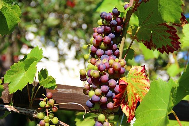 2020-ig 20 milliárd Ft áll rendelkezésre a szőlő-bor ágazat számára