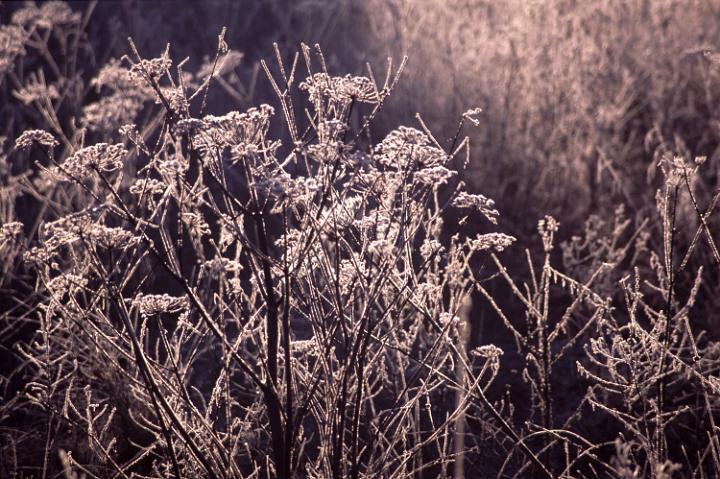 Az őszi fagy is káreseménynek minősül majd.