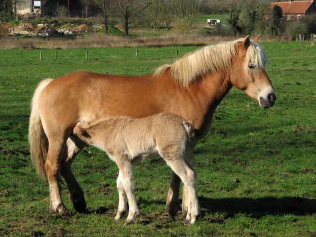 Anya és csikója