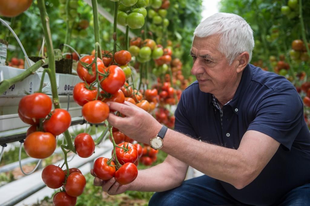 Jelen pillanatban a legtöbb zöldség fajban jobb termelői árak vannak, mint a tavalyi évben és ez remélhetőleg kitart az egész szezonban is.