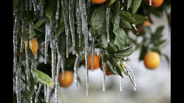 Idén várhatóan már nem kell tartanunk fagykártól, de annál több minden fenyegeti a növényeinket Fotó: bet.com