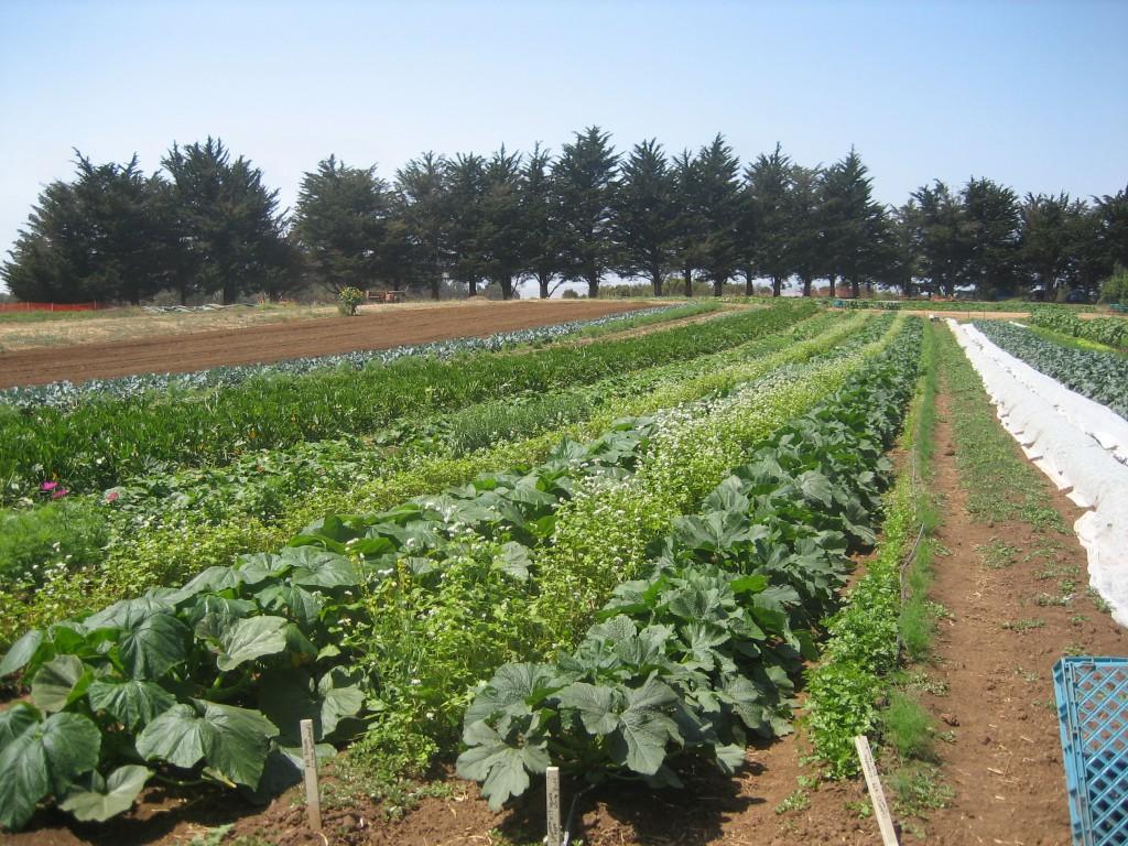 Biogazdaság