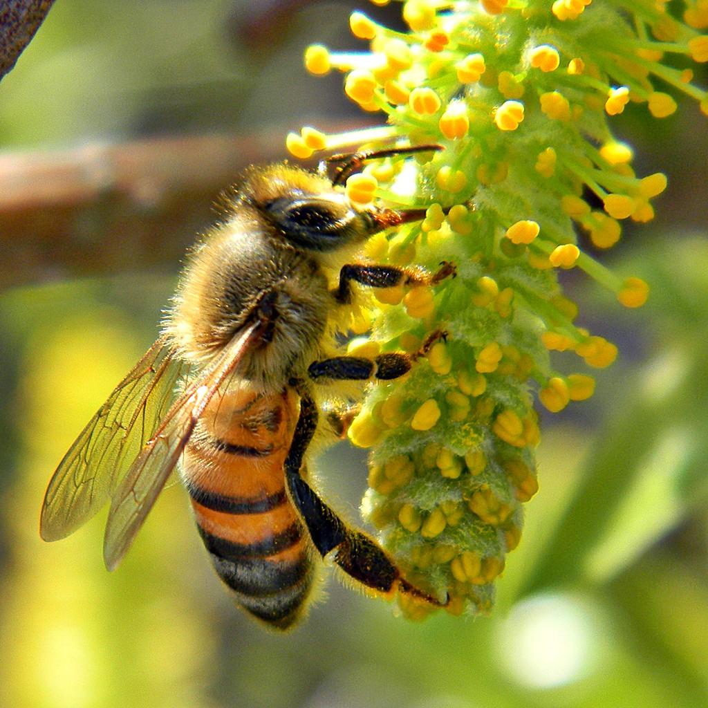 Vigyázzunk a méhekre! Sokat köszönhetünk nekik.