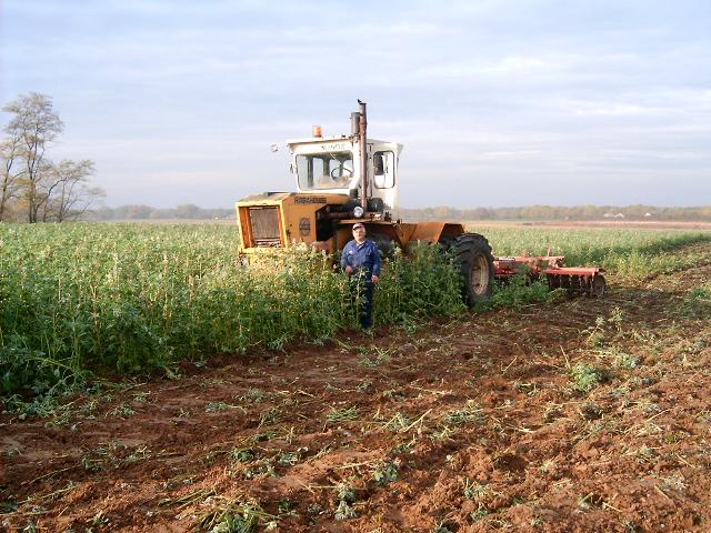 A zöldtrágya növények tökéletes takarást biztosítanak a talajnak, ami megakadályozza a talaj kiszáradását