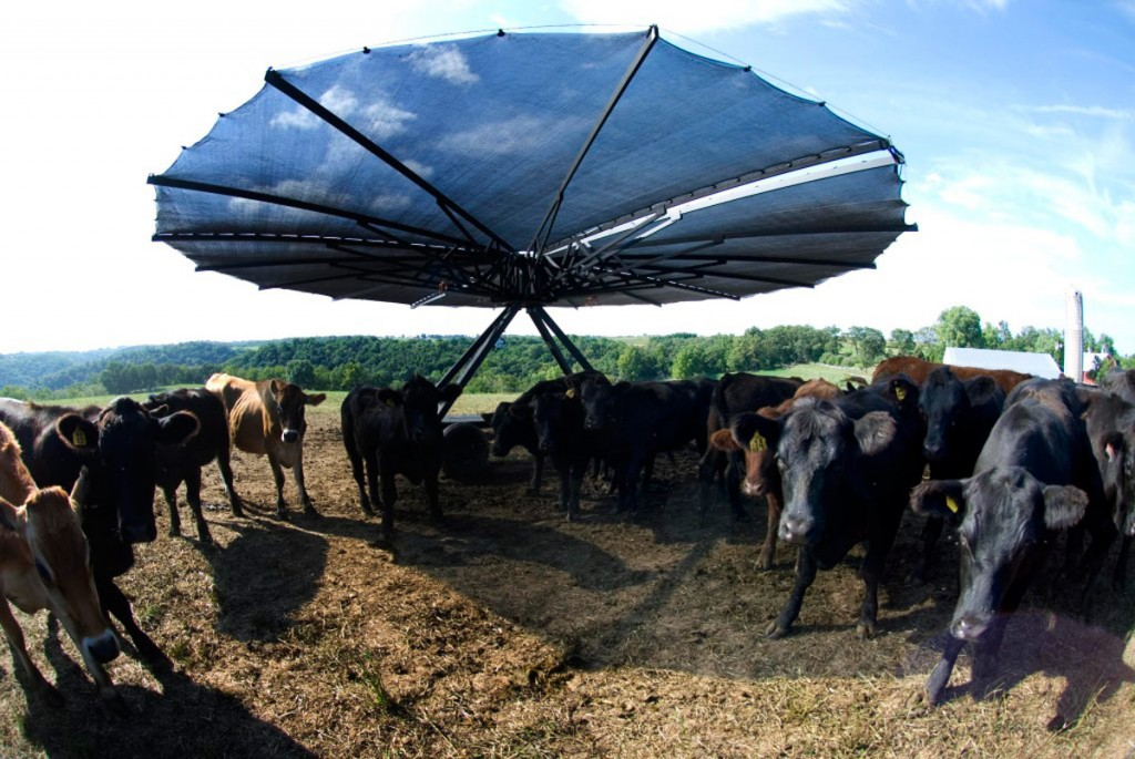 """Az """"Árnyék Mennyország"""" alatt hűsölnek a tehenek"""