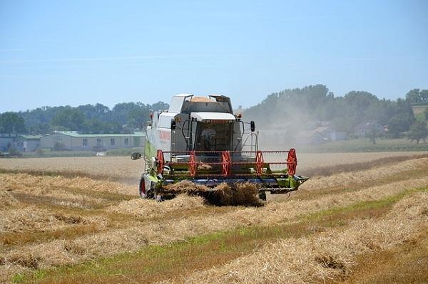 Jól halad az árpa betakarítása, a területek majdnem feléről sikerült már learatni a termést