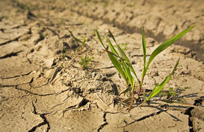 A tűző nap és a sok csapadék nélküli nap megviseli a növényeket.