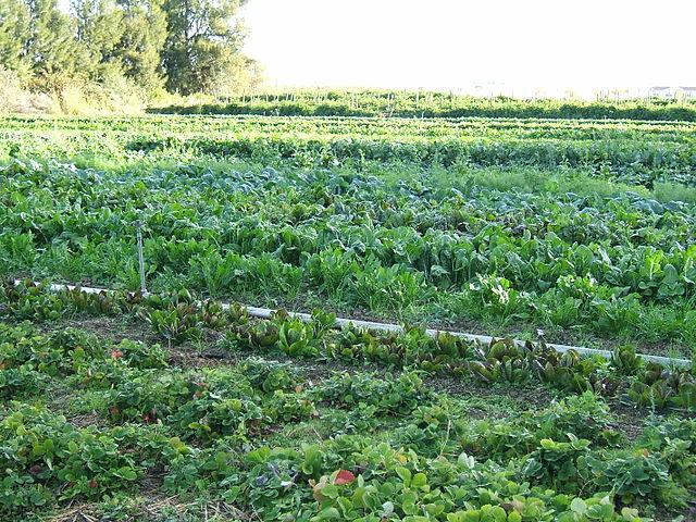 Biogazdálkodás során nem feltétlenül kapunk olyan rendezett termőterületet, mint a jelenlegi gazdálkodási folyamatok mellett, viszont a kevésbé dekoratív külső mellé sokkal nagyobb belső érték párosul.