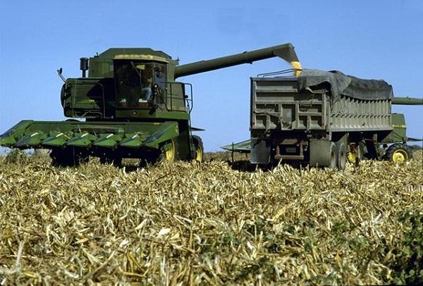 Már a kukoricát is aratják
