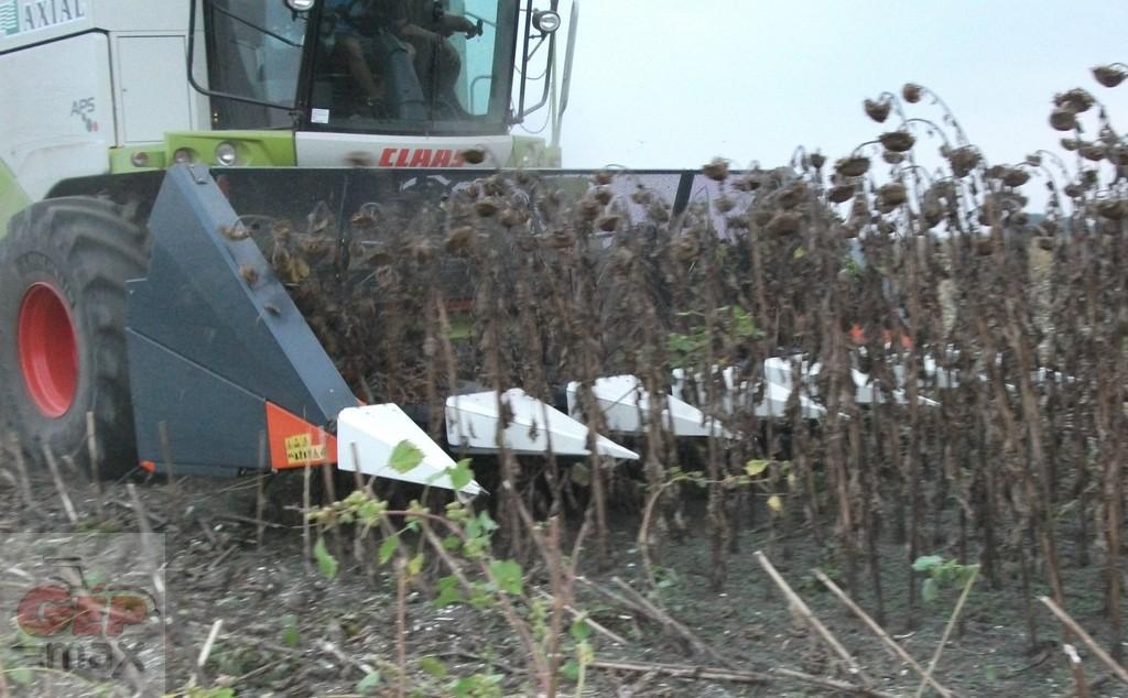 Lassan végeznek a zalai gazdák a napraforgó betakarításával