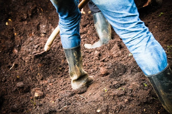Az alapos őszi ásás az alapja a következő évi sikeres növénytermesztésnek