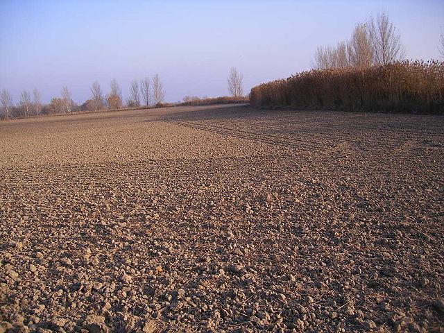 Az állami tulajdonban lévő földterületek képezik tárgyát a novemberben induló földliciteknek