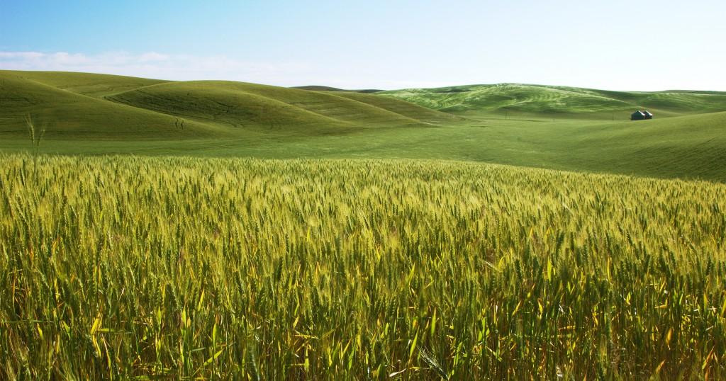 Az árveréseken egy gazda maximum 300 hektár földet vehet meg