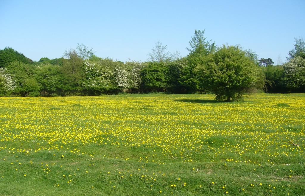 A természetes növénytakaró megóvása elengedhetetlen az ökológiai egyensúly fenntartásához