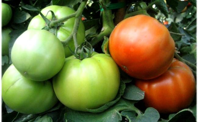 A bio terményeké lehet a jövő (Fotó: higishop.eu)
