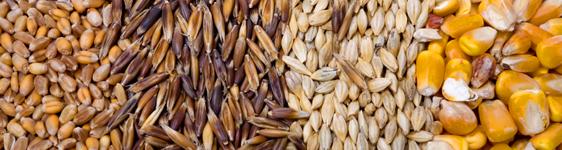 A gabonafélék kivitele 23 százalékkal erősödött a vizsgált időszakban (Fotó: cargill.hu)