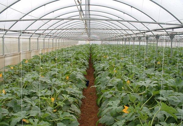 Fóliasátras zöldségtermesztés esetén egyszerűbben ki lehet szolgálni a vásárlók mennyiségi és minőségi követelményeit, így a profitszerzés is könnyebb lehet
