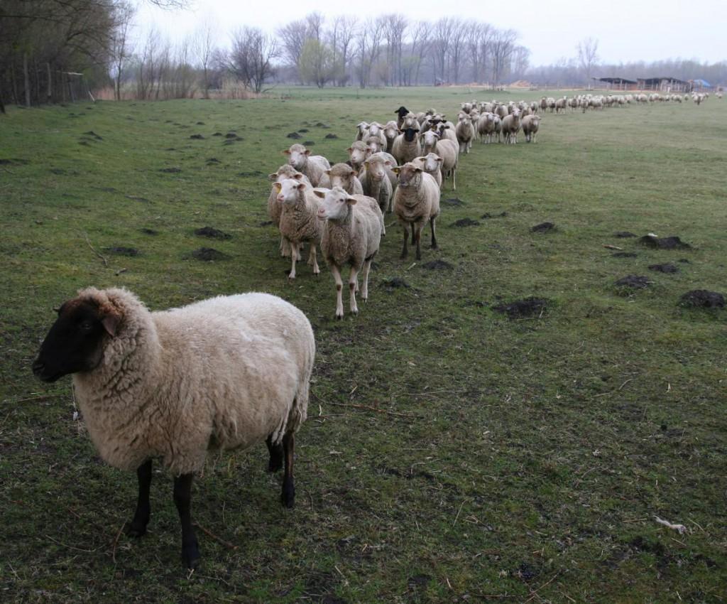 Az ökológiai állattartásnak is megvannak a szabályai (Fotó: pointernet.pds.hu)