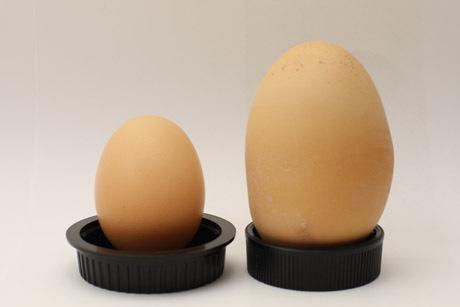 A normál tojáshoz képest óriás.